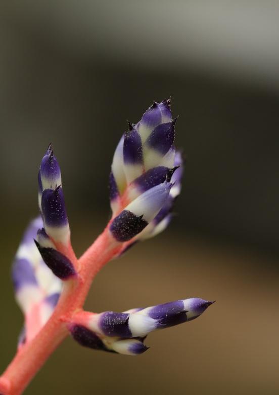 Als kleuren samenkomen - Sinds kort een Macro lens dus druk aan het oefenen. Tijdens een bezoek aan de Orchideeënhoeve zag ik deze mooie plant