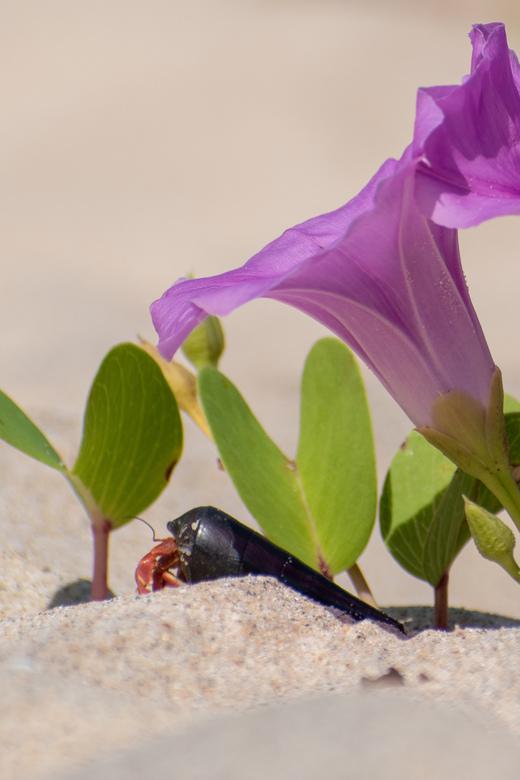 Strandganger - Genomen op het strand op Thailand.