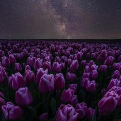 Spring stars...