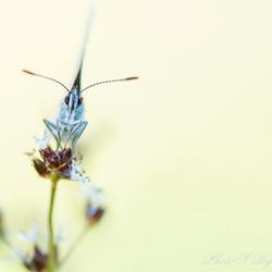 Teek vindt zelfs vlinder.
