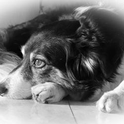 Lara in zwart-wit