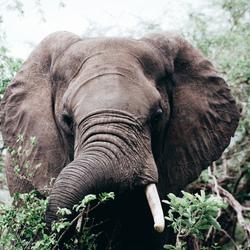Op Safari Door het Kruger Park (Zuid-Afrika)