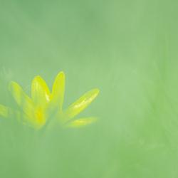 Verborgen geel
