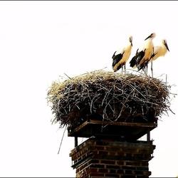Het nest wordt te klein.....