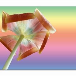 Sunny flower ....