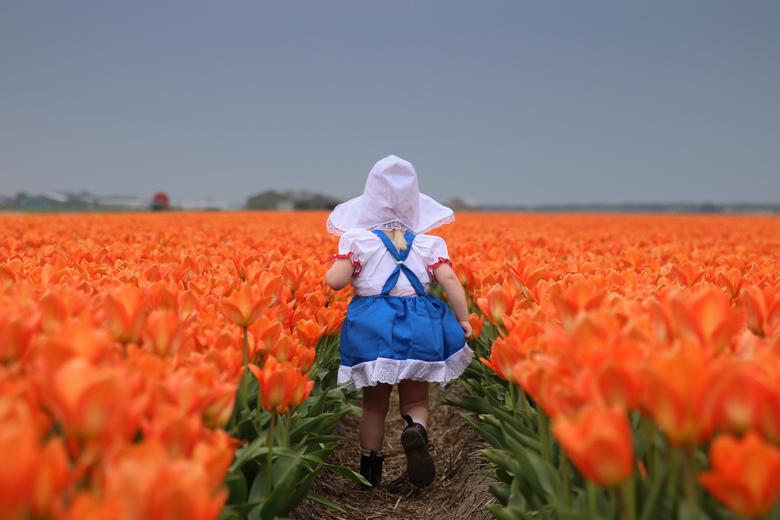 oranje boven + fijne koningsdag + hollands bloemenmeisje tussen de oranje tulpen - oranje boven + fijne koningsdag + hollands bloemenmeisje tussen de