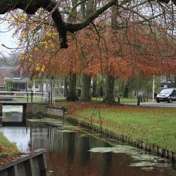 Herfstkleuren rondom het Mauritshuis