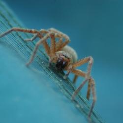 Ietsie pietsie spider