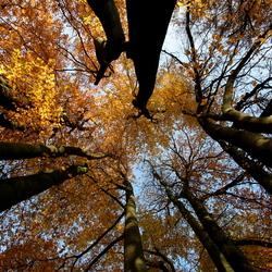 herfst oisterwijk