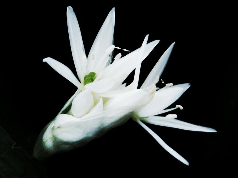 Serine in White