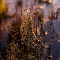 Spinneweb in de ochtend...