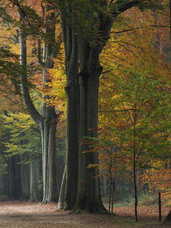 Herfstscene - Park van Brasschaat tijdens de herfst  (België)