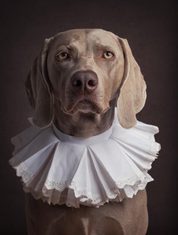 Van Honden en Oude Meesters - Als je dan een hond in huis hebt die Noble of adel in haar kennelnaam heeft dan moet je haar toch een keer als oude adel