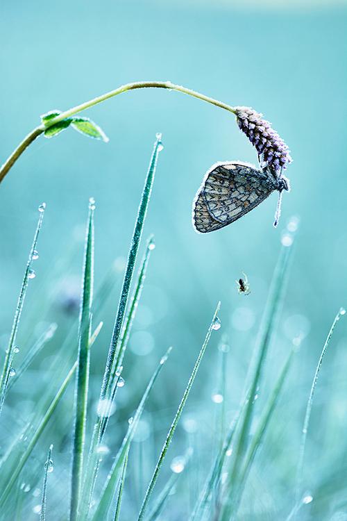 Ringoogparelmoervlinder - Op een prachtige ochtend kon ik deze ringoogparelmoervlinder fotograferen. Na een zeer koude nacht (nachtvorst was zelfs aan