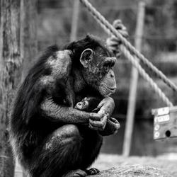 Moeder en jong