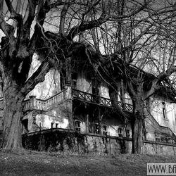 Bled house