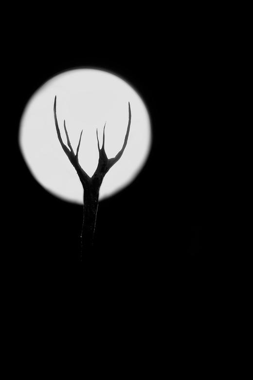 Halloween -            Say boo and scary on<br /> <br /> Geweizwammetjes lenen zich bij uitstek voor dit soort foto&#039;s. Weer lekker in het bos g