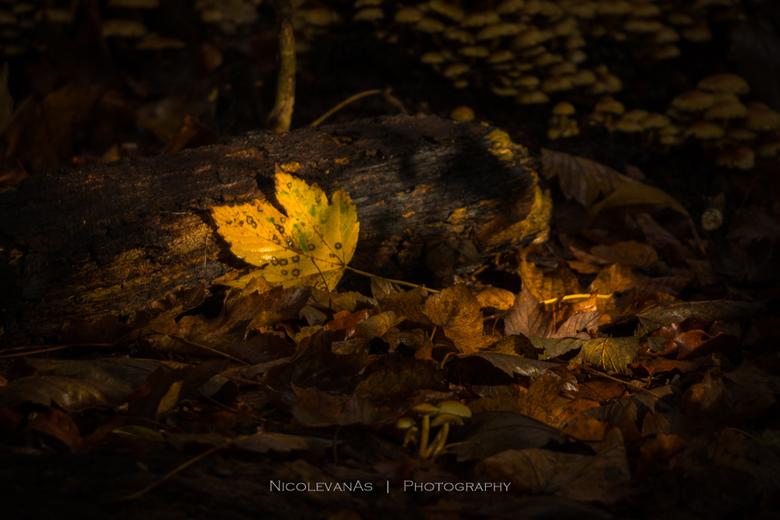 Lichtval. - Lichtval tussen de bomen door.  Precies op het mooie net afgevallen gele herfstblad.