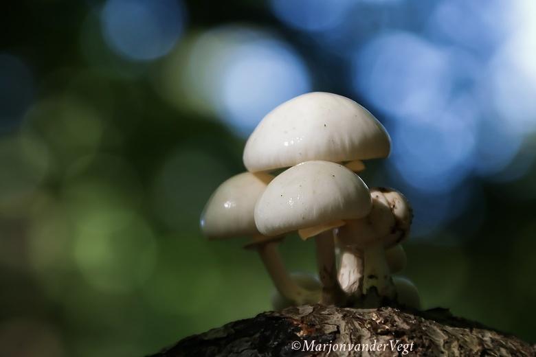 Zo mooi kan porselein zijn - En &#039;t zonnetje schijnt, hoeveel mooier kan &#039;n dag beginnen...<br /> <br /> Dan met deze mooie paddenstoelen.<
