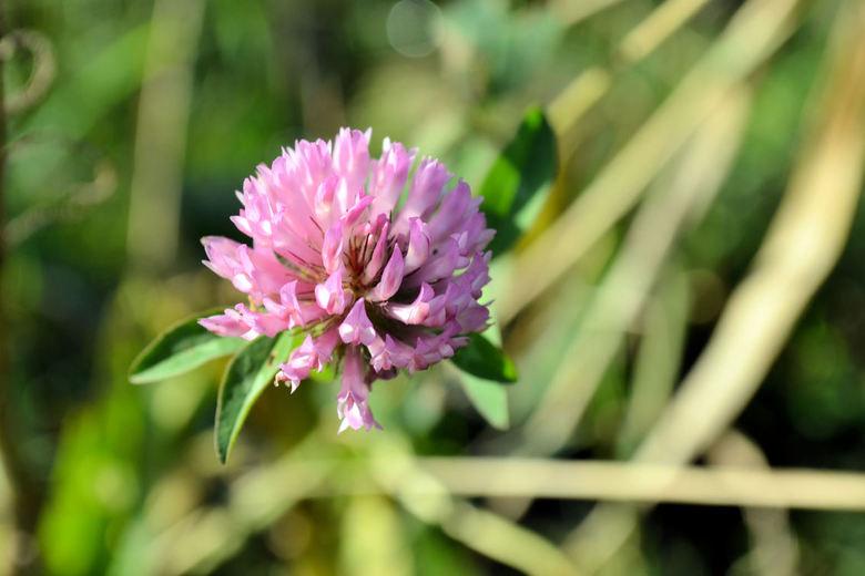 Eenzaam bloemetje  - Eenzaam paars bloemetje tussen het groen....