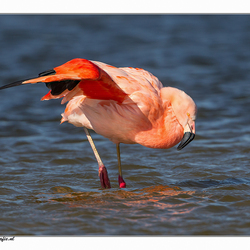 flamingo 3.