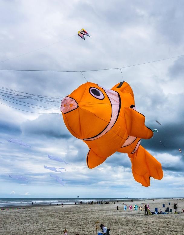 Fly, little Nemo!
