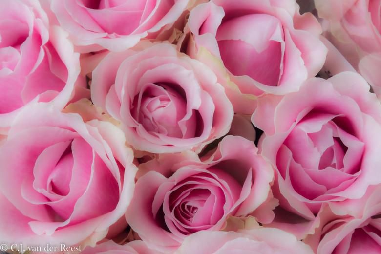 rozen -
