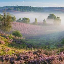 De wildernis op de Veluwe