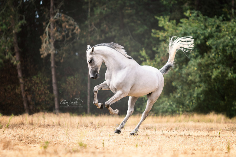 White Power - De kracht en de uitstraling van een los paard.
