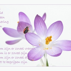 Rust Zacht..*
