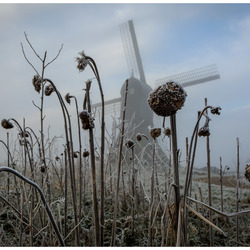 Iceflowers,.................
