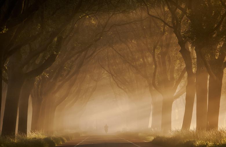 Gehuld in mist