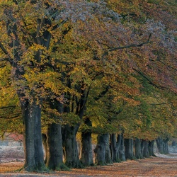 Halverwege de Herfst