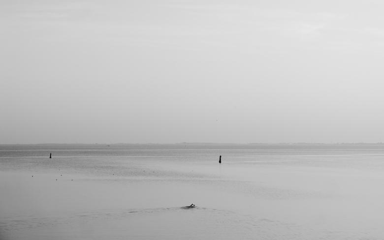 Zwemmer - Strijenham - Zwemmer heeft genoeg ruimte voor zichzelf... Genomen in Strijenham, Zeeland.