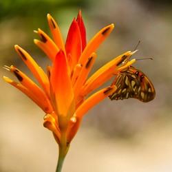 vlinder oranje bloem.jpg