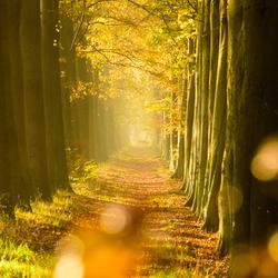 Mist in het herfstbos