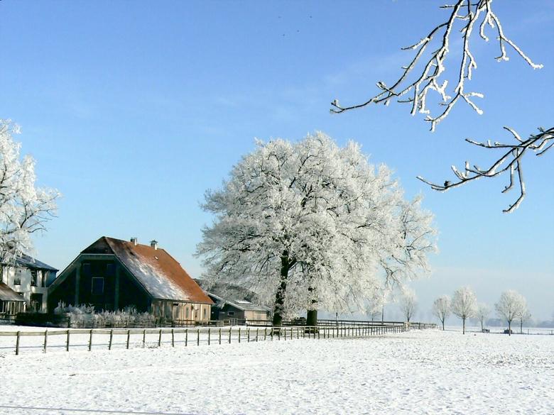 RUST en bevroren stilte - bij gebrek aan voorjaarsbloemen dan nog maar een van deze winter die zich voorbereid op het nieuwe leven in de natuur.