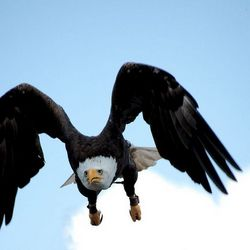Vogelvlucht1