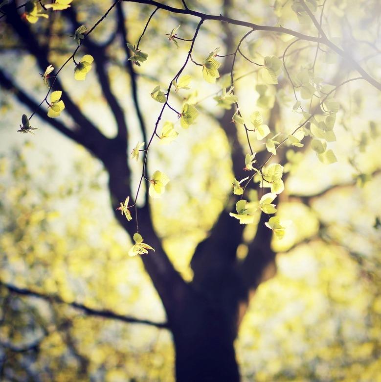 new leaves - boom met nieuwe bladeren