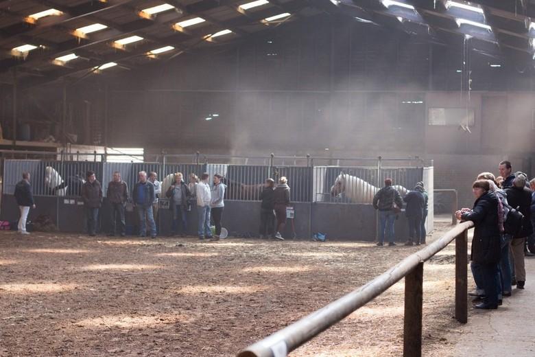 De Witte Vallei - Het licht valt in de stallen vlak voor de jaarlijkse hengstenkeuring van de Irish Cob Society te Heusden.