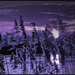 the colour of purple ..
