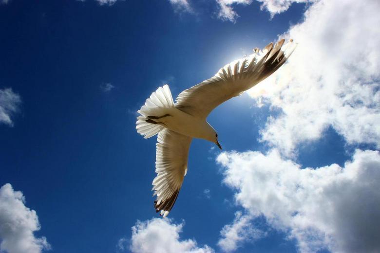 Flying Blue - .