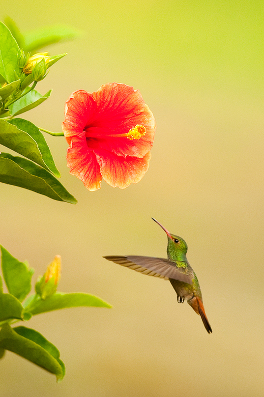 """hummingbird hunting - Nu """"Andrea66"""" terug is uit Panama zal het een aantal van jullie niet verrassen dat ook ik daarvan terug ben. Een mooi"""