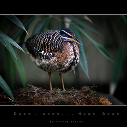 East, West... Nest Best...