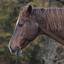 DSC_9415  Paard.