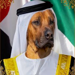 Sjeik Guus-Bin-Salman