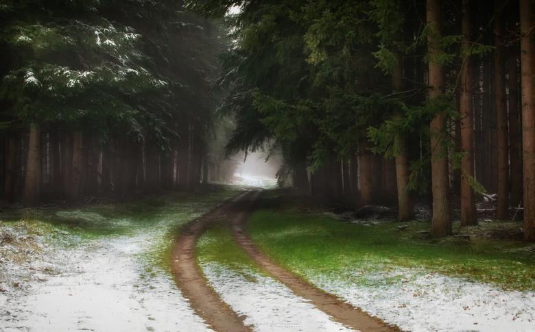 Follow the Path - De Hollandse winters worden steeds warmer, waardoor sneeuw steeds zeldzamer wordt, het zorgt voor een sprookjes achtige sfeer, door