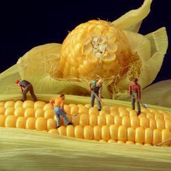 Then plough deep while sluggards sleep, and you shall have corn to sell and to keep.