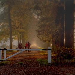 Herfst in s-Gravenland