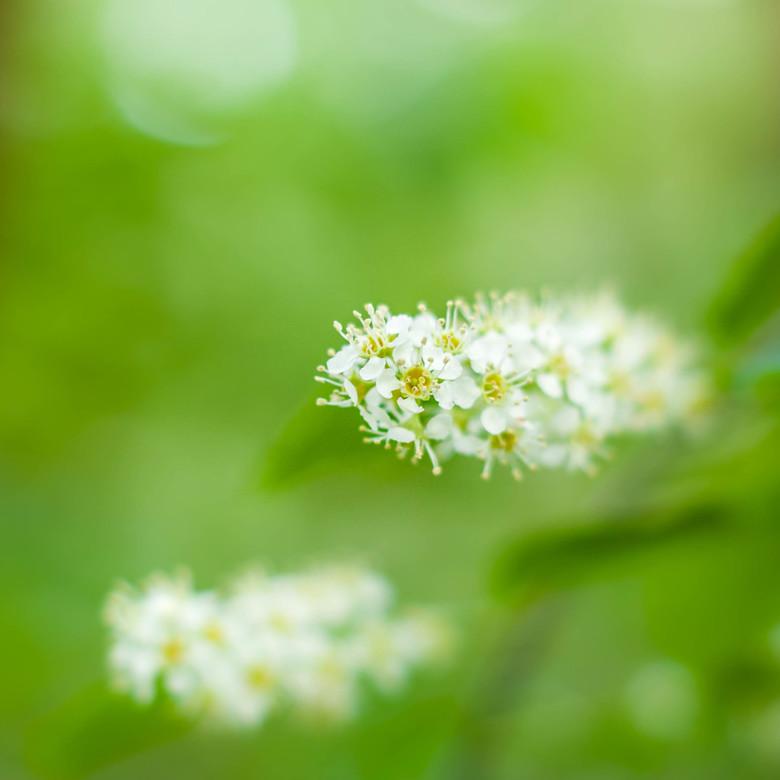 Flowercloud - Onlangs vastgelegd op een regenachtige morgen, terwijl ik met Betaa aan de wandel was. <br /> <br /> Iedereen nog bedankt voor de liev